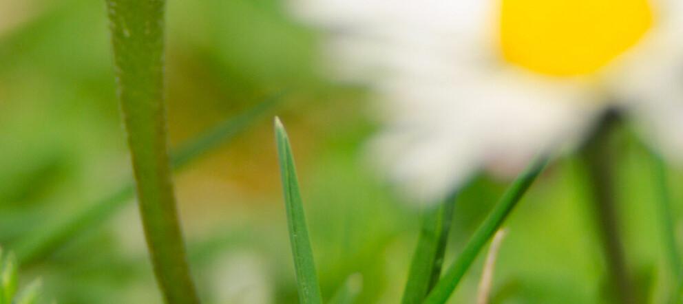 Unterrichtsmaterial zum Frühling