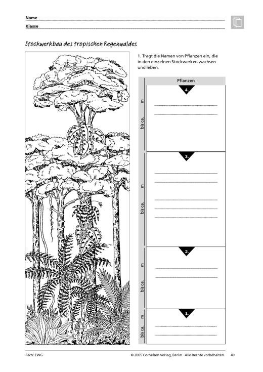 stockwerkbau des tropischen regenwaldes arbeitsblatt webshop download cornelsen. Black Bedroom Furniture Sets. Home Design Ideas