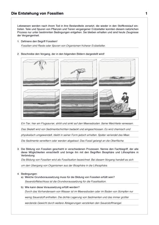 """Lösungen zum Arbeitsheft """"Lösungsheft Naturwissenschaften 4 Natur-Mensch-Technik"""" (zu LB und AH) - Lösungen - Webshop-Download"""