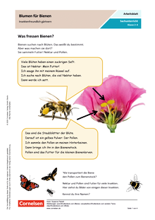Blumen für Bienen - Insektenfreundlich gärtnern - Arbeitsblatt mit Lösungen