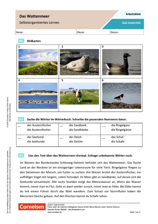 DaZ/Deutsch: Das Wattenmeer - Selbstorganisiertes Lernen - Arbeitsblatt mit Lösungen