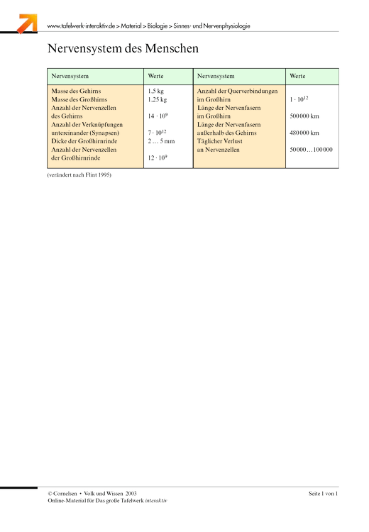 Nervensystem des Menschen - Arbeitsblatt | Cornelsen