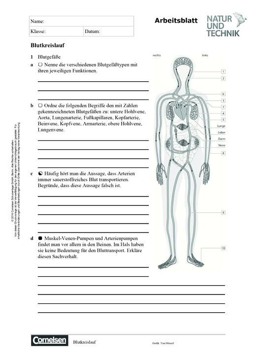 """Biologie: Kopiervorlagen zu dem Kapitel """"Versorgung mit Stoffen und ..."""